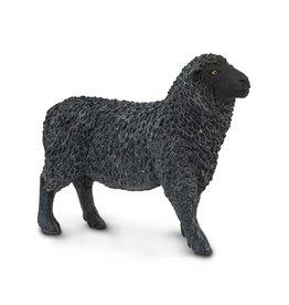 Safari Black Sheep