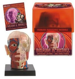 Ein-o-Science Brain and Skull Anatomy Kit