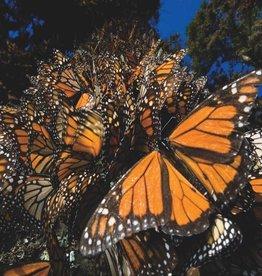 New York Puzzle Monarch Butterflies 500pcs