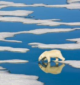 New York Puzzle Polar Bear on Ice 500 PCS