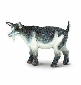 Safari Pygmy Nanny Goat
