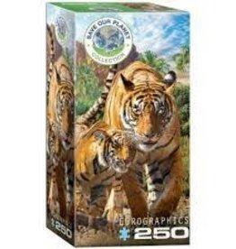 EuroGraphics Tigers 250 pc