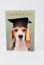 Design Design Grad Beagle