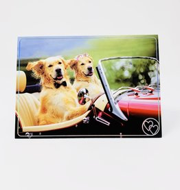 Design Design Two Dogs in Convertible
