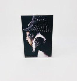 Pictura Boxer dog