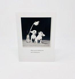 Borealis Press Two puppies