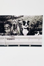 Design Design Dogs in truck bed