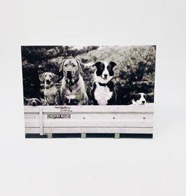 Design Design Dogs in truck bed