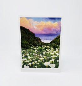 Palm Press Calla Lily Sunrise
