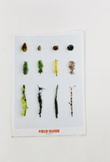 Field Guide Conifer Sticker