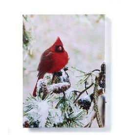 Cardinal LED Canvas Print
