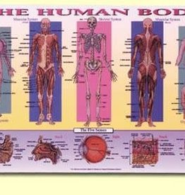 Painless Learning Products Human Body Learning Mat
