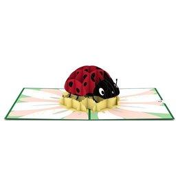 LovePop Ladybug Card