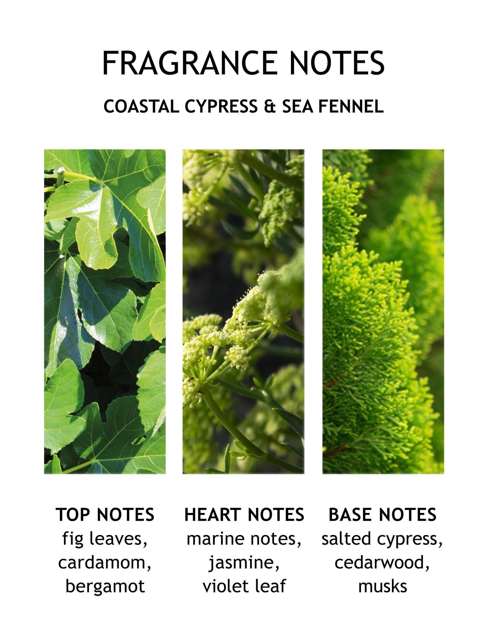 MBL Body Lotion  Coastal Cypress+ Sea Fennel
