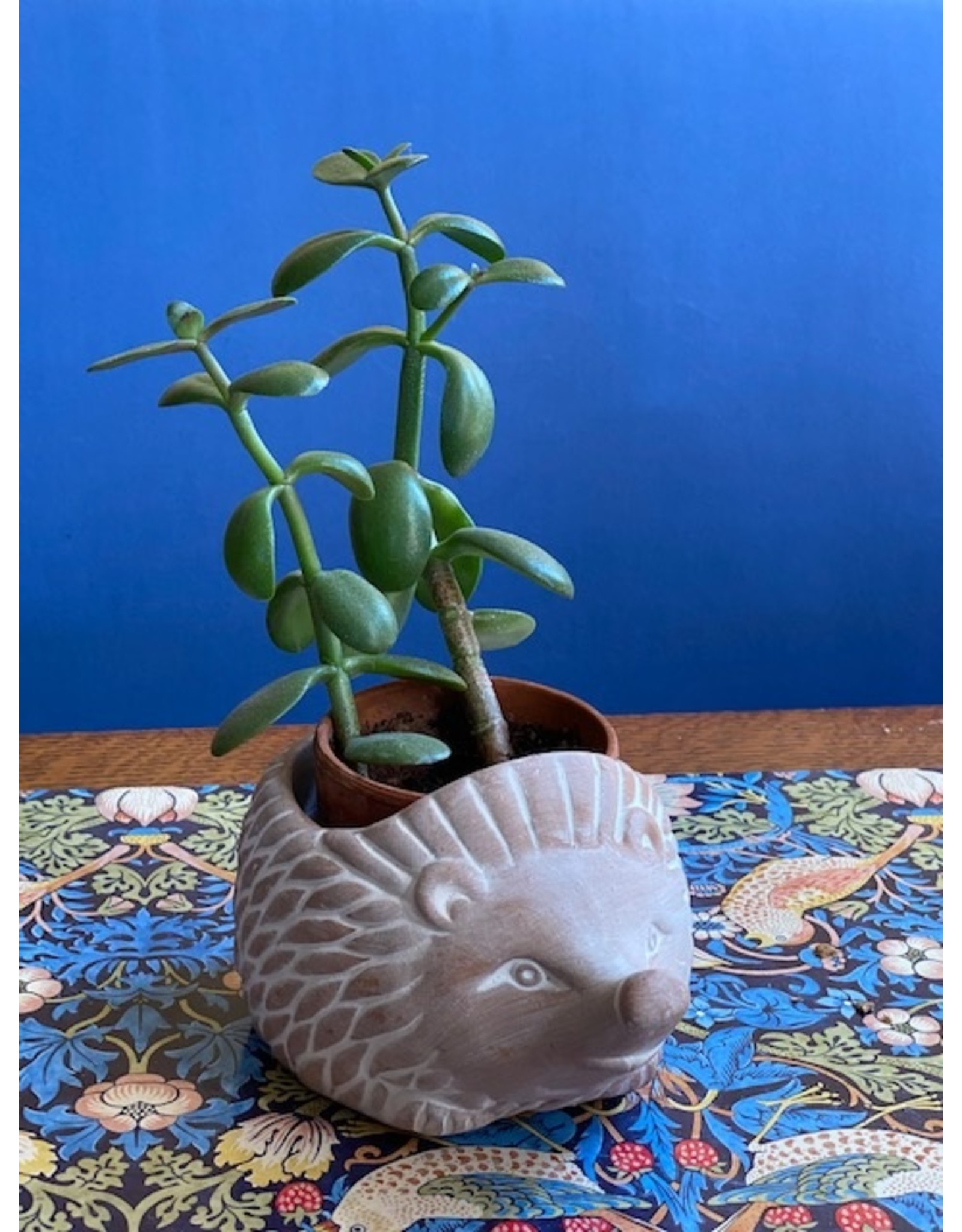 Ten Thousand Villages Mini Hedgehog Terra Cotta Planter
