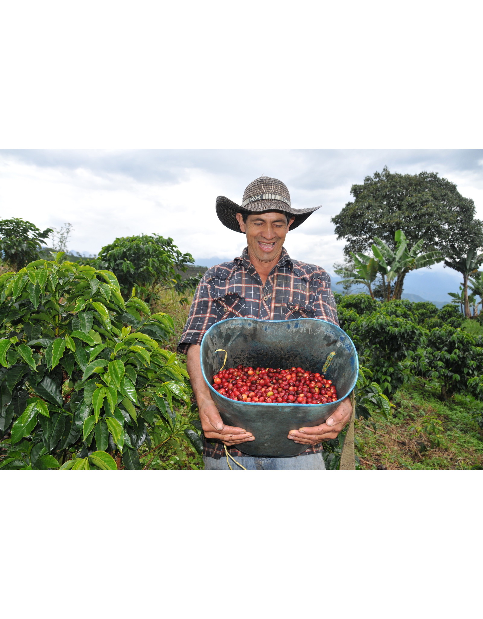 Level Ground Trading Colombian Dark Roast Coffee (Ground)