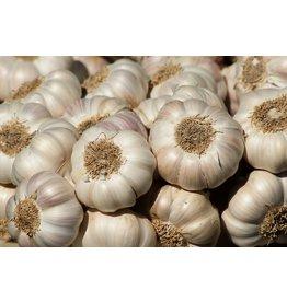 Bulb - Garlic California Baja White