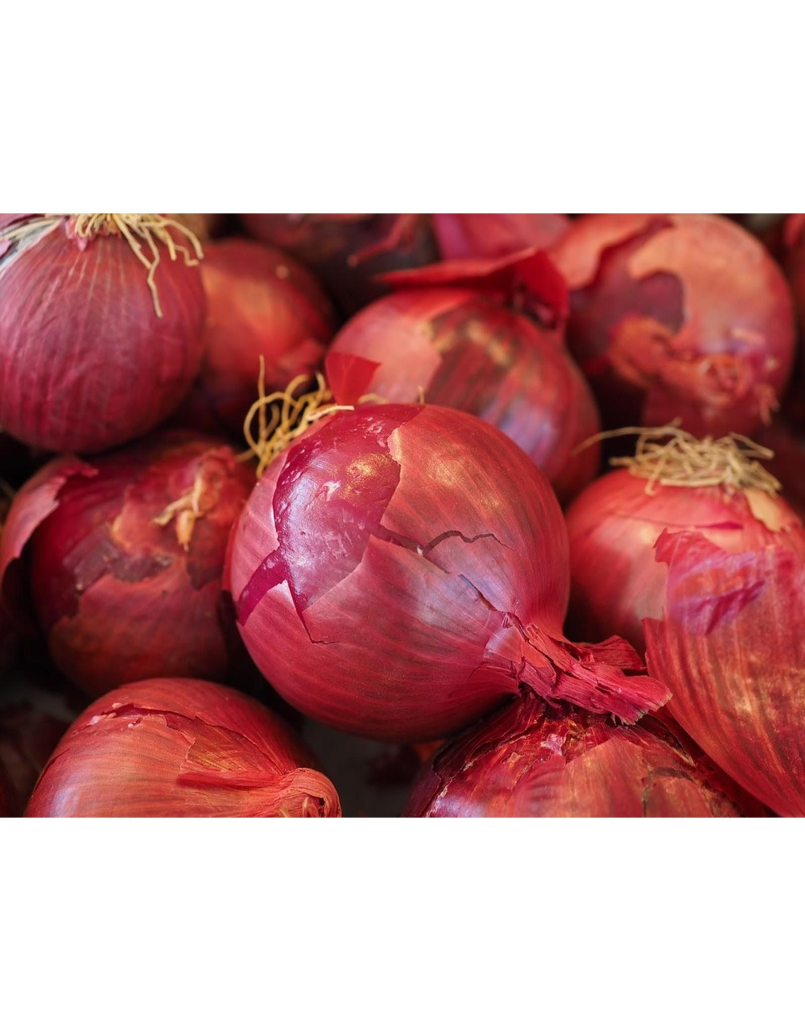 Bulb - Dutch Onions - Red Baron