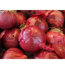 Bulb - Dutch Onions - Red Baron