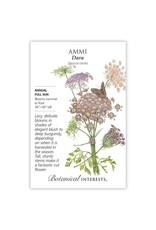 Seeds - Ammi Dara