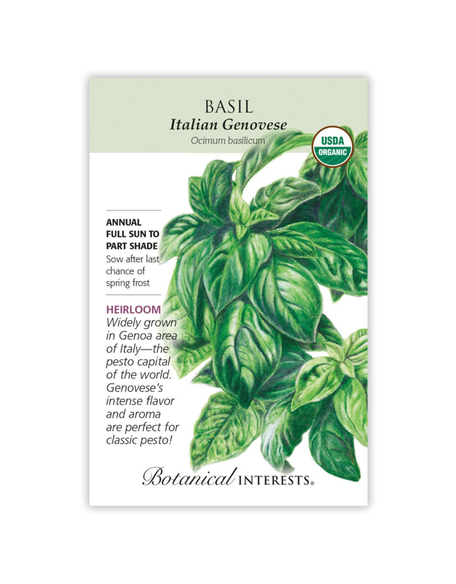 Seeds - Basil Italian Genovese Organic - Large Packet