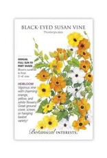 Seeds - Black-Eyed Susan Vine