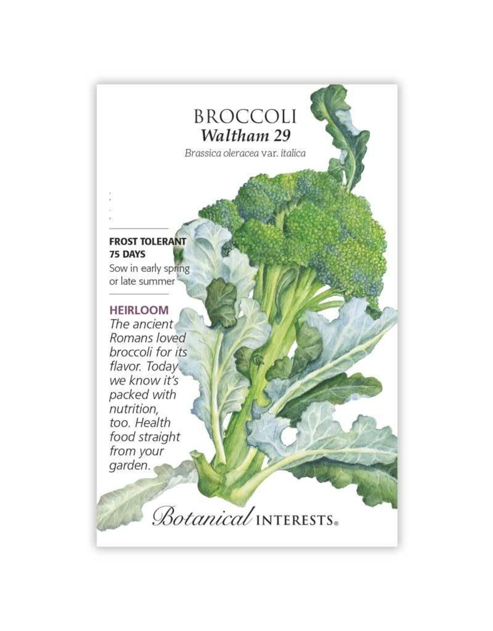 Seeds - Broccoli Waltham 29