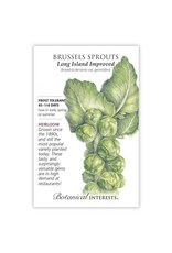Seeds - Brussels Sprouts Long Island Imp