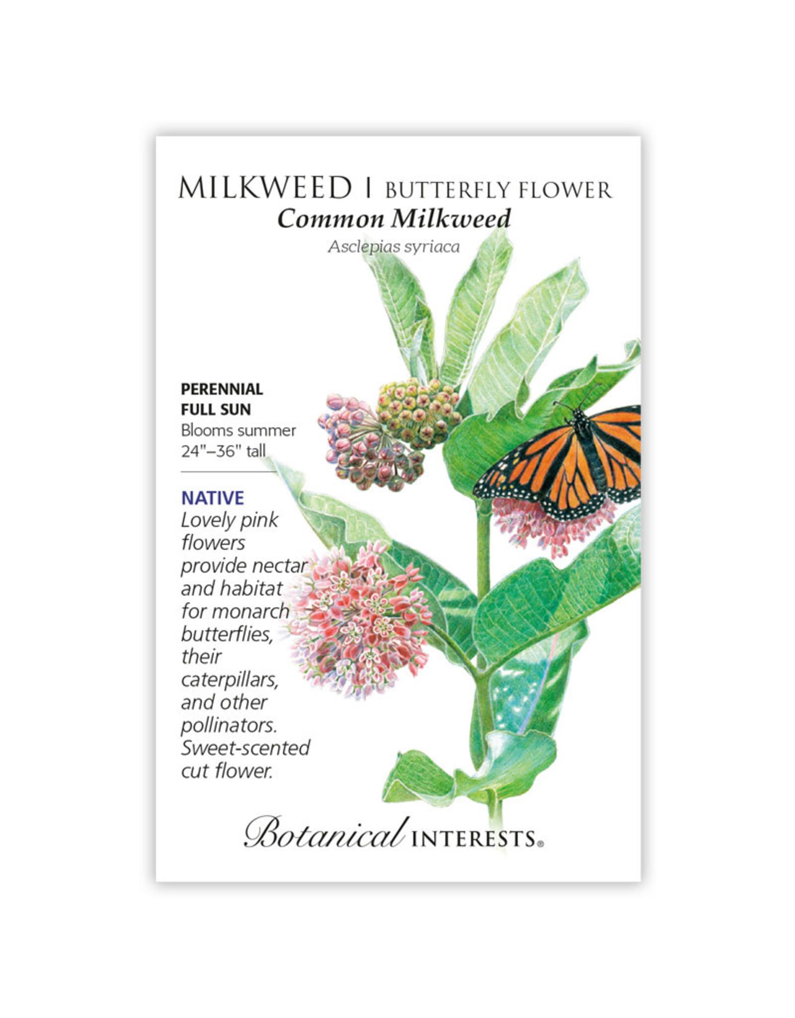 Seeds - Butterfly Flower Milkweed Common