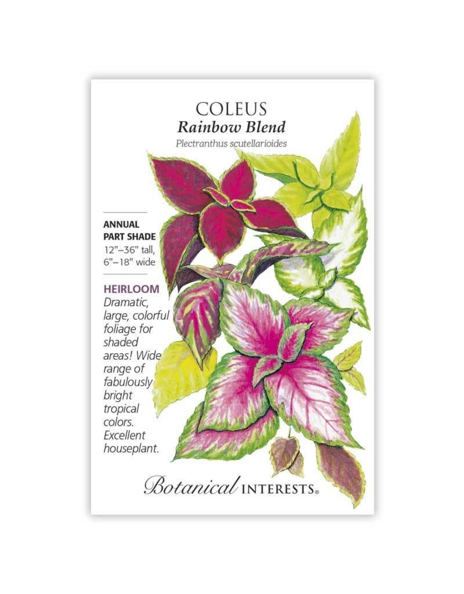 Seeds - Coleus Rainbow Blend