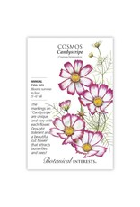 Seeds - Cosmos Candystripe