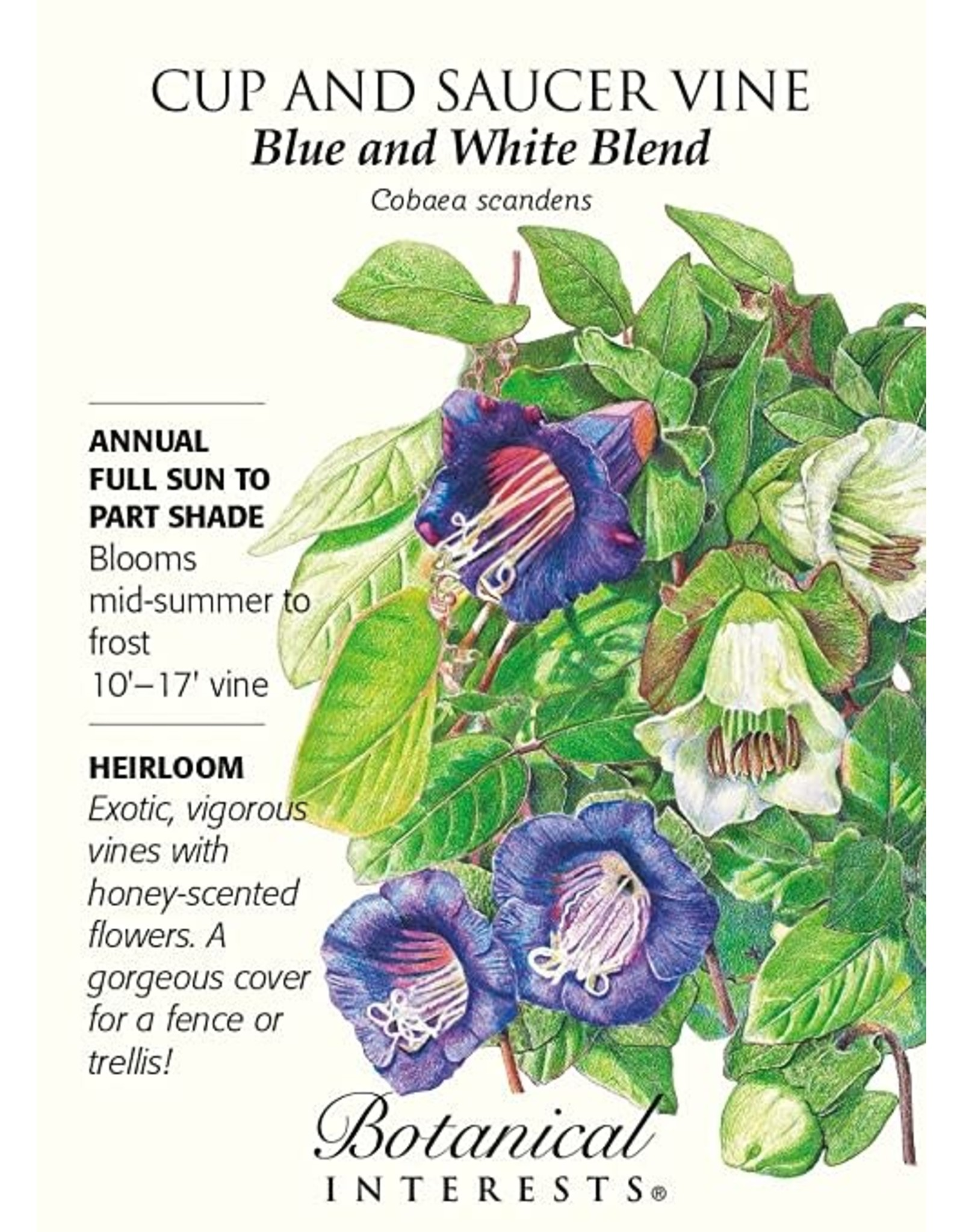 Seeds - Cup and Saucer Vine, Blue and White Blend