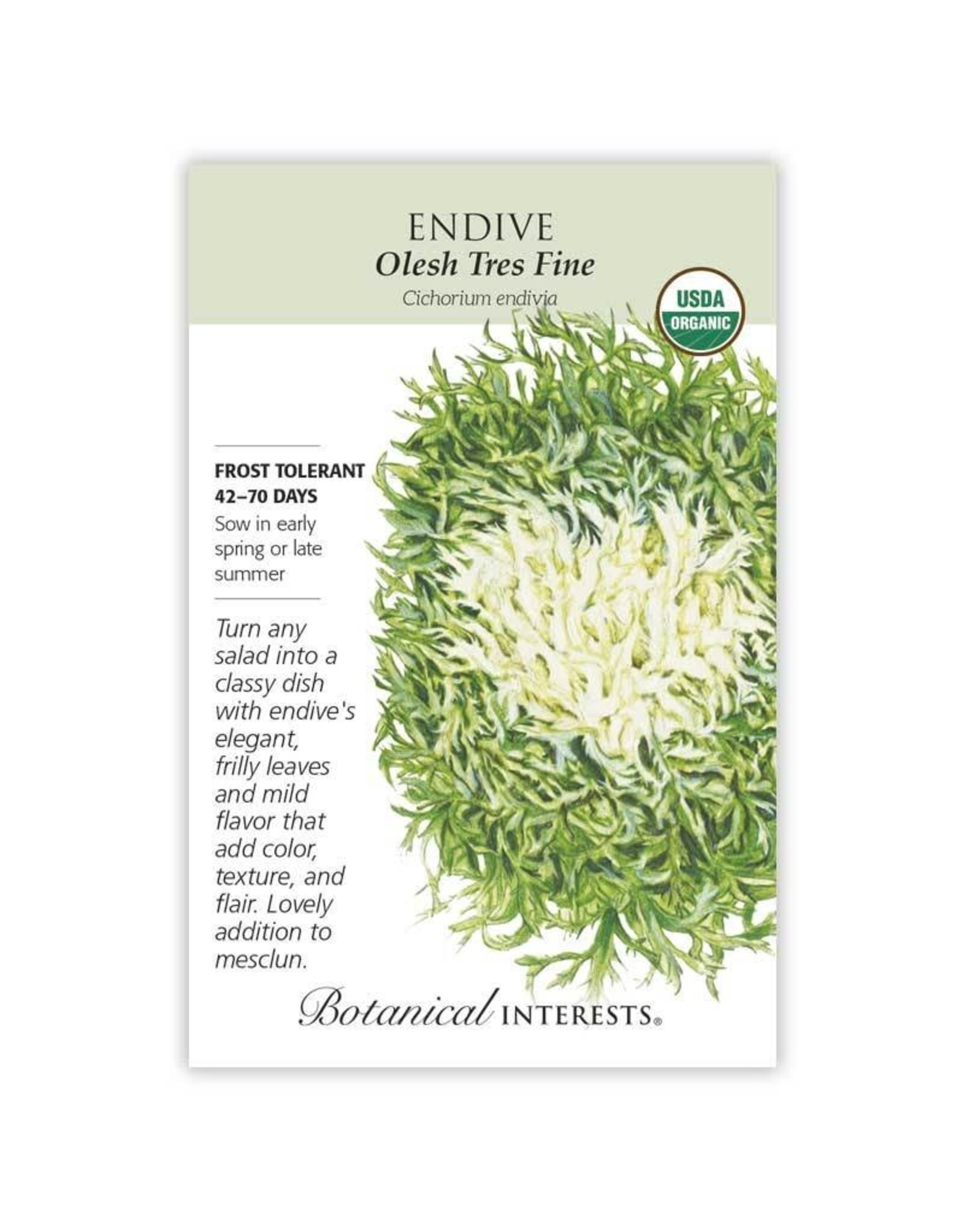 Seeds - Endive Olesh Tres Fine Organic