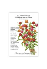 Seeds - Gomphrena QIS Fiery Sunrise Blend