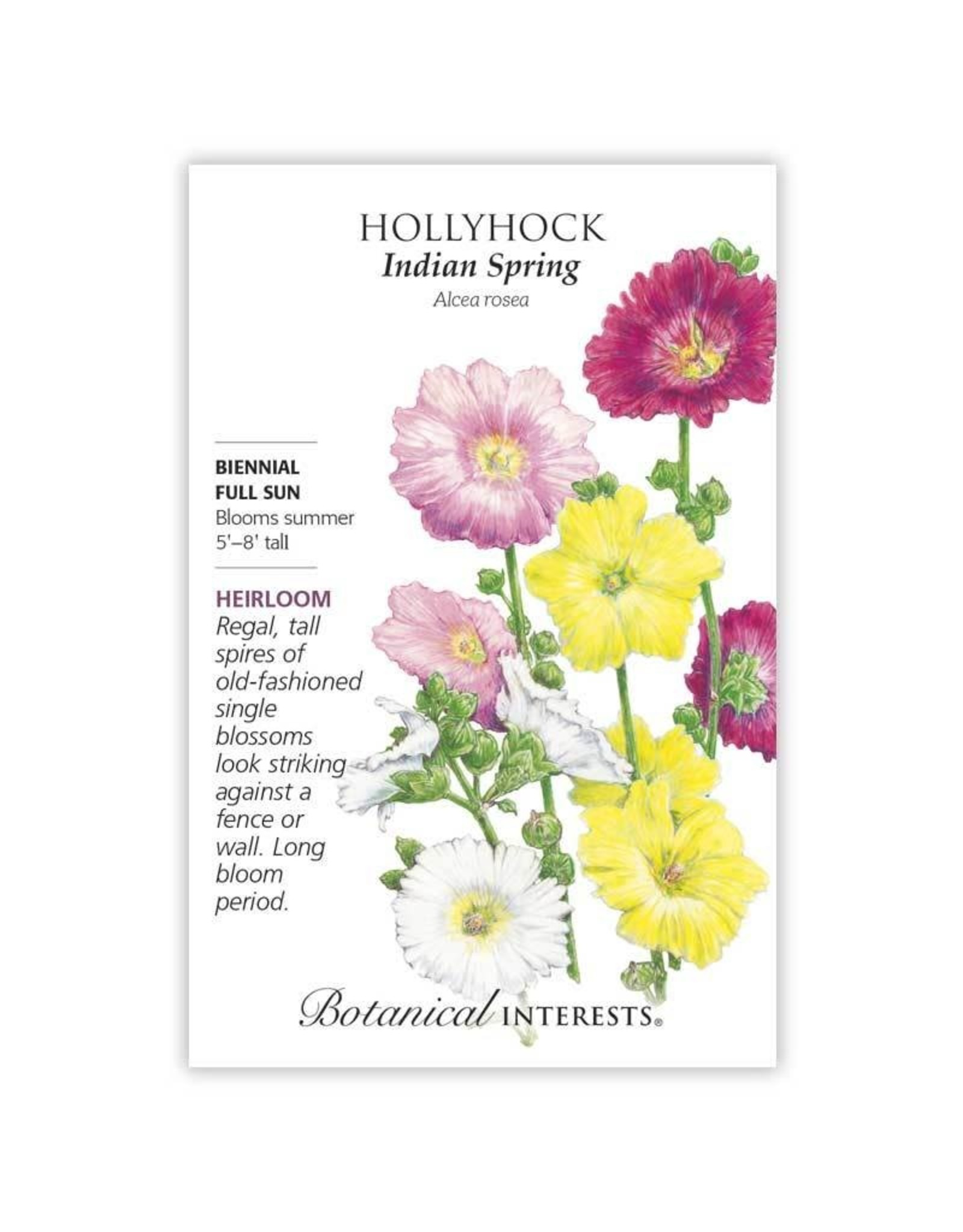 Seeds - Hollyhock Indian Spring