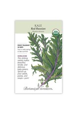 Seeds - Kale Red Russian Organic
