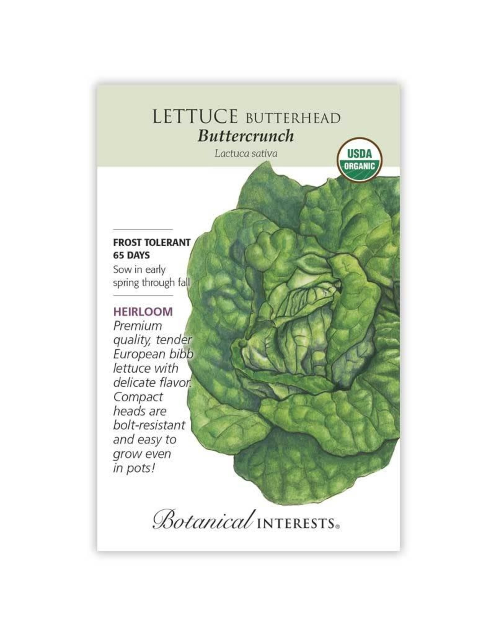 Seeds - Lettuce Butterhead Buttercrunch Org