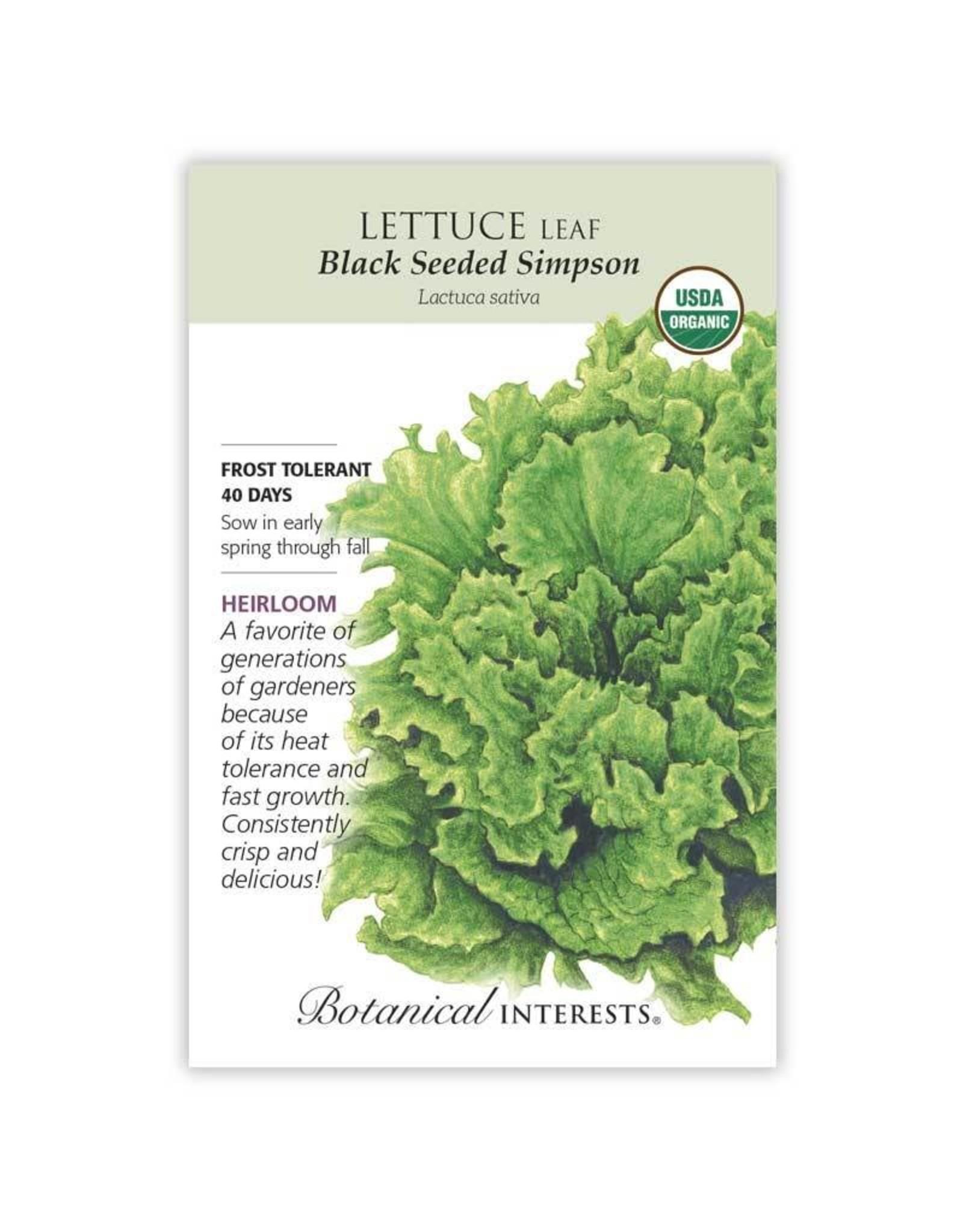 Seeds - Lettuce Leaf Black Seeded Simpson Organic