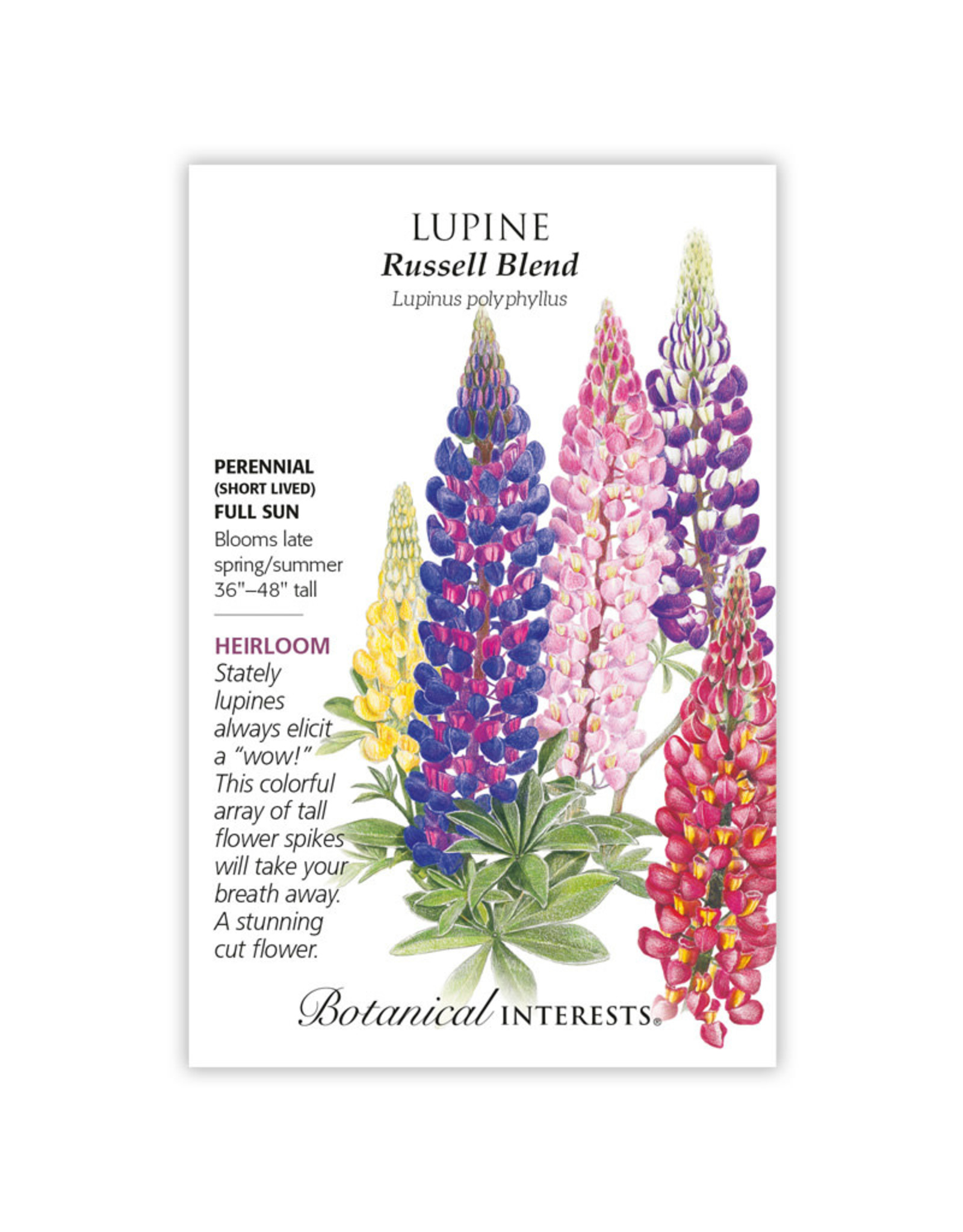 Seeds - Lupine Russell Blend