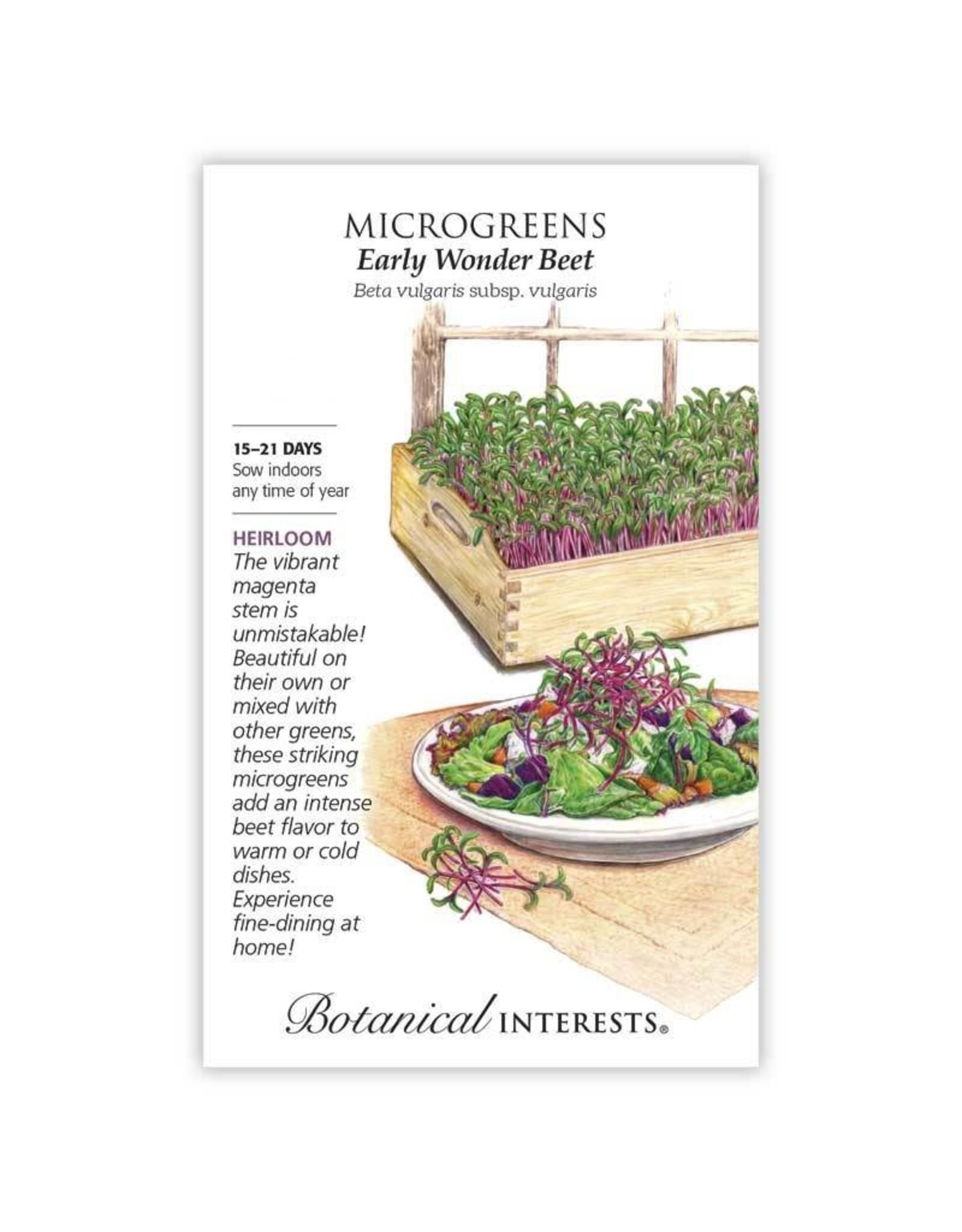 Seeds - Microgreens Beet Early Wonder, Large