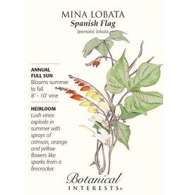Seeds - Mina Lobata Spanish Flag