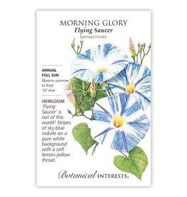 Seeds - Morning Glory Flying Saucer