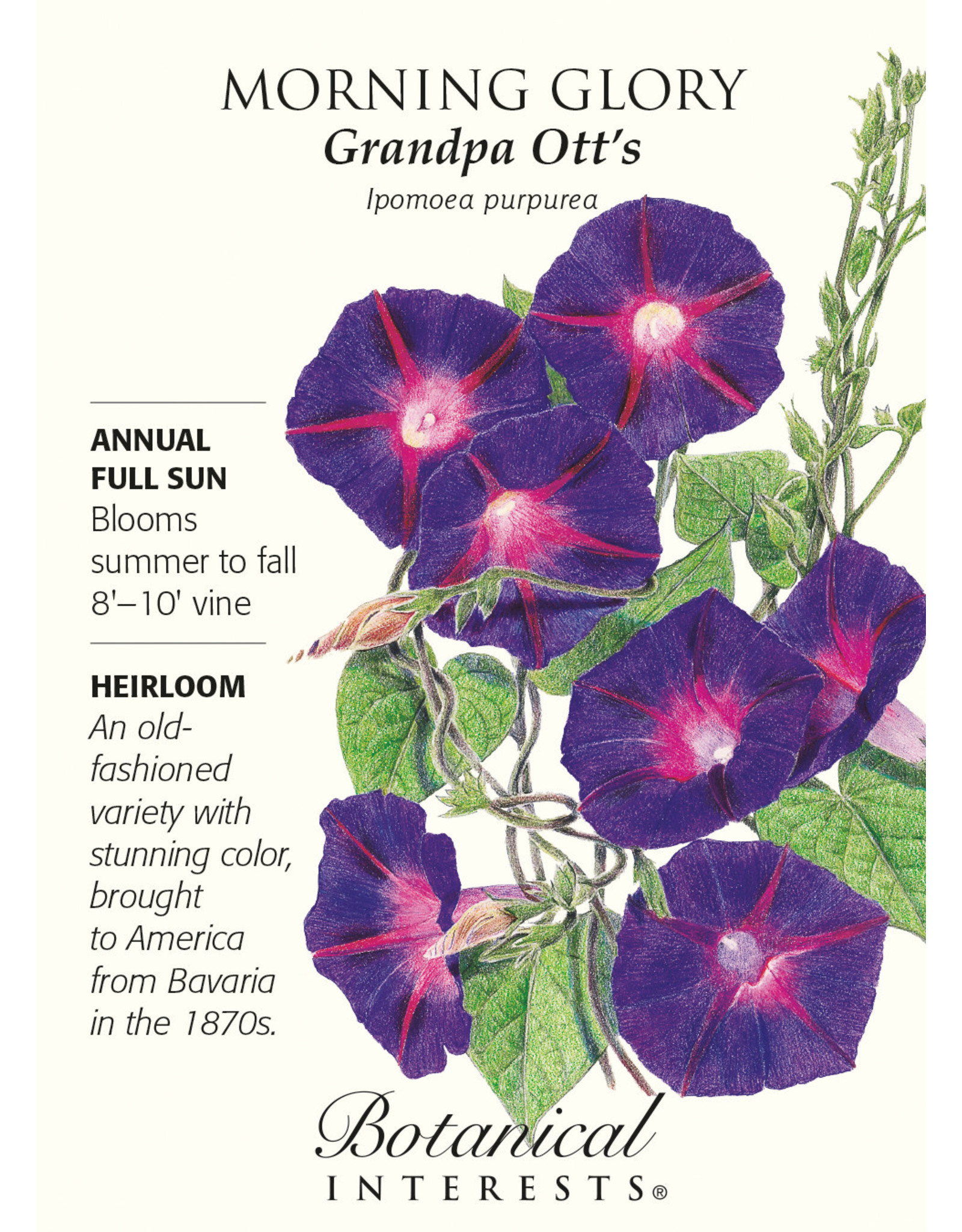 Seeds - Morning Glory Grandpa Ott's