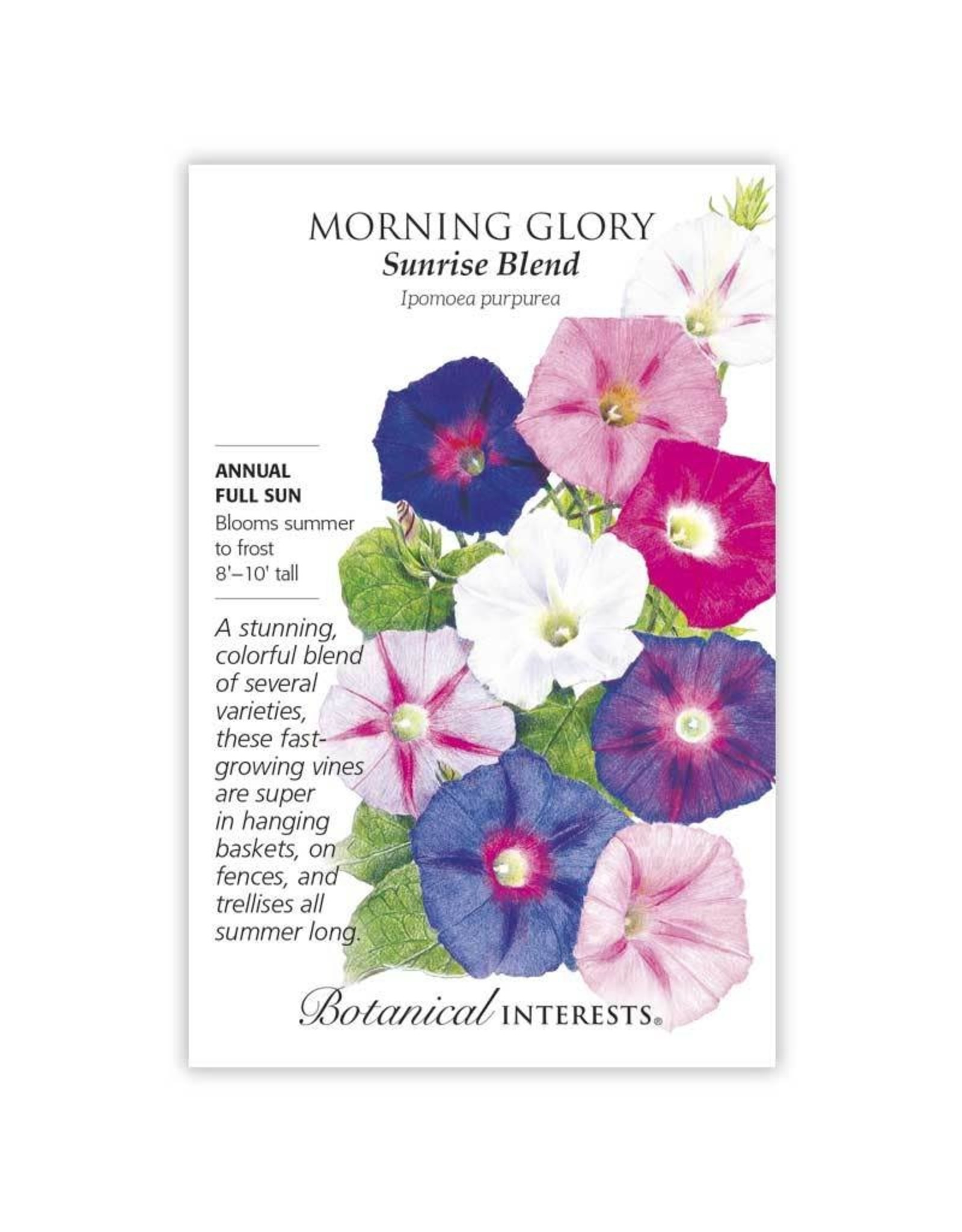Seeds - Morning Glory Sunrise Blend