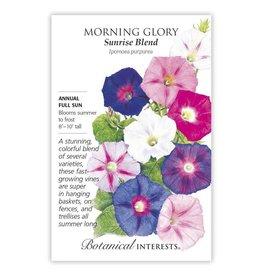 Seeds - Morning Glory Sunrise Blend