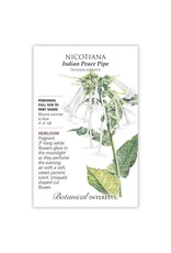 Seeds - Nicotiana Indian Peace Pipe