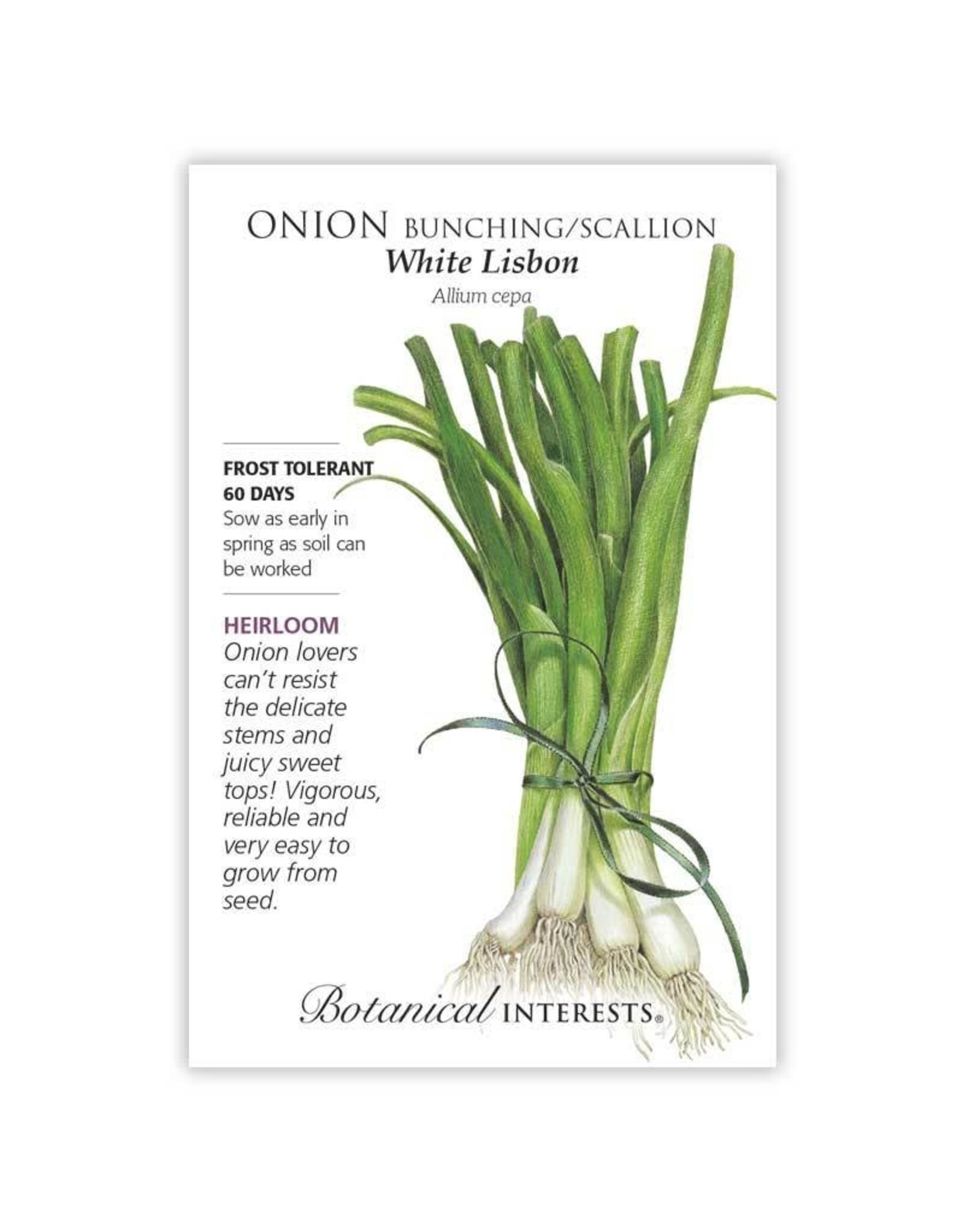 Seeds - Onion Bunching, Scallion, White Lisbon