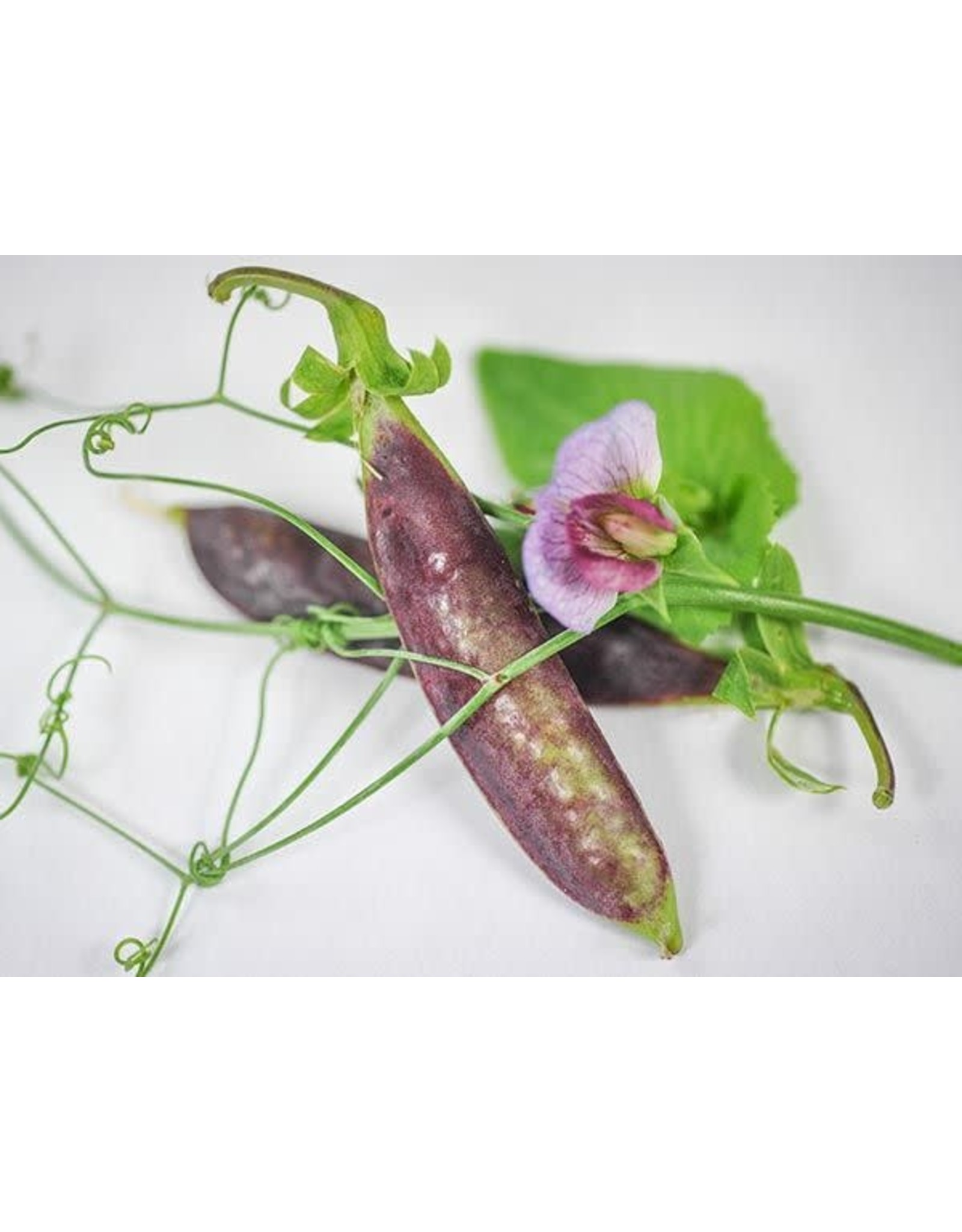 Seeds - Pea Snap Purple Sugar Magnolia