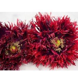 Seeds - Poppy Black Swan