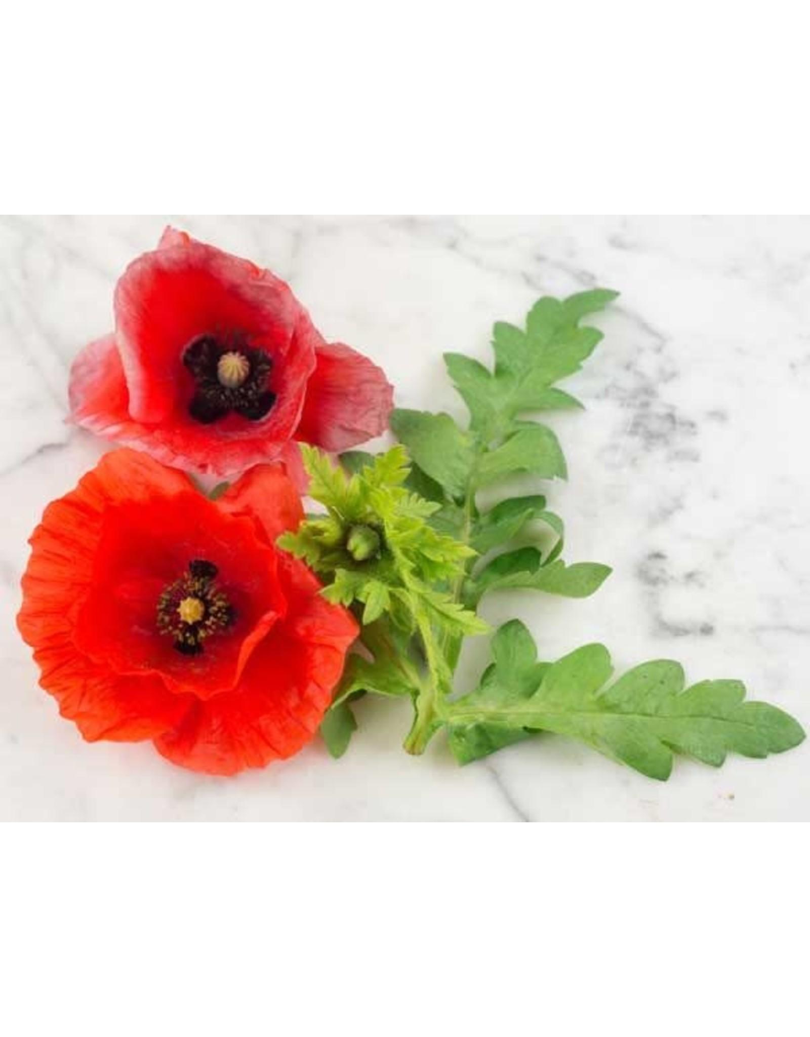 Seeds - Poppy Flanders American Legion